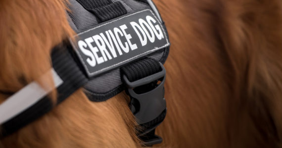 Close-up on the vest of a service dog